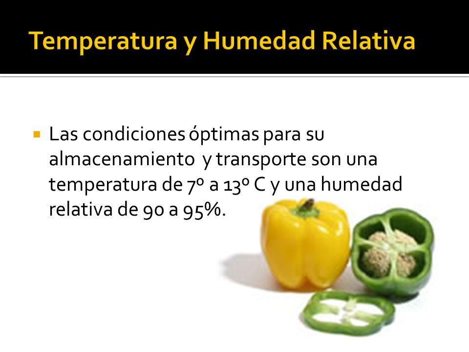 Las condiciones óptimas para su almacenamiento y transporte son una temperatura de 7º a 13º C y una humedad relativa de 90 a 95%.