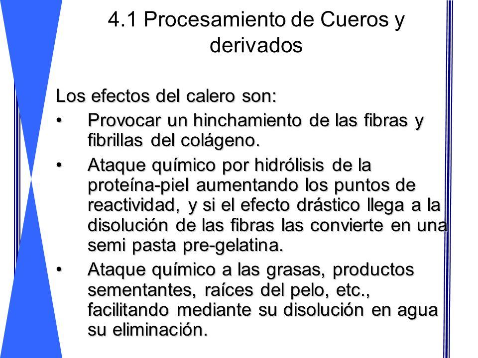 4.1 Procesamiento de Cueros y derivados Los efectos del calero son: Provocar un hinchamiento de las fibras y fibrillas del colágeno.Provocar un hincha
