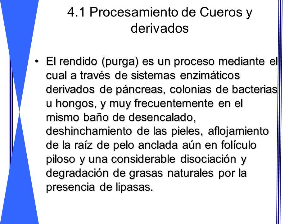 4.1 Procesamiento de Cueros y derivados El rendido (purga) es un proceso mediante el cual a través de sistemas enzimáticos derivados de páncreas, colo