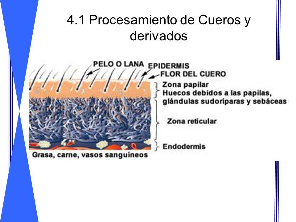 Métodos de conservación:Métodos de conservación: 4.1 Procesamiento de Cueros y derivados Salado Secado Pasar de 50-60% iniciales a 30% y después a 12% El salado consiste en la deshidratación de la piel, incluso se eliminan los compuestos hidrosolubles que se van con la salmuera.