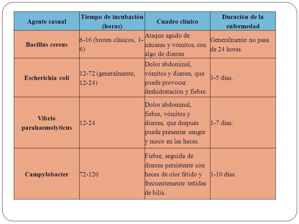 Agente casual Tiempo de incubación (horas) Cuadro clínico Duración de la enfermedad Bacillus cereus 6-16 (brotes clásicos, 1- 6) Ataque agudo de náuseas y vómitos, con algo de diarrea Generalmente no pasa de 24 horas.