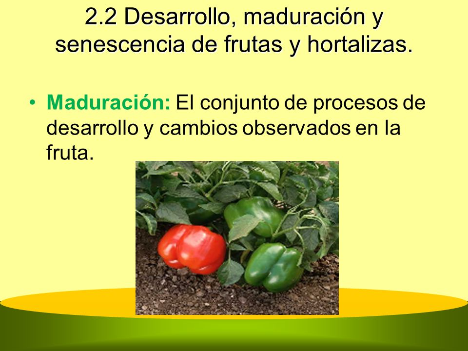 2.2 Desarrollo, maduración y senescencia de frutas y hortalizas. Maduración: El conjunto de procesos de desarrollo y cambios observados en la fruta.