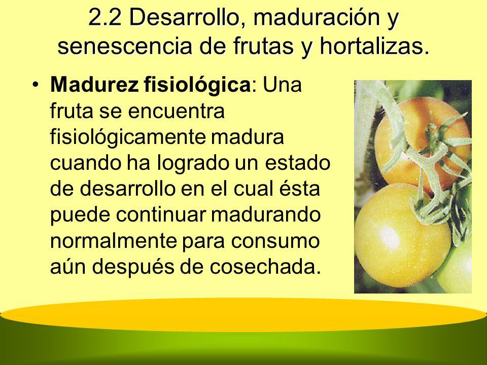 2.2 Desarrollo, maduración y senescencia de frutas y hortalizas. Madurez fisiológica: Una fruta se encuentra fisiológicamente madura cuando ha logrado