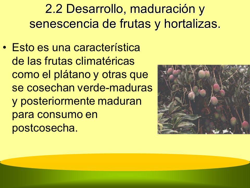 2.2 Desarrollo, maduración y senescencia de frutas y hortalizas. Esto es una característica de las frutas climatéricas como el plátano y otras que se