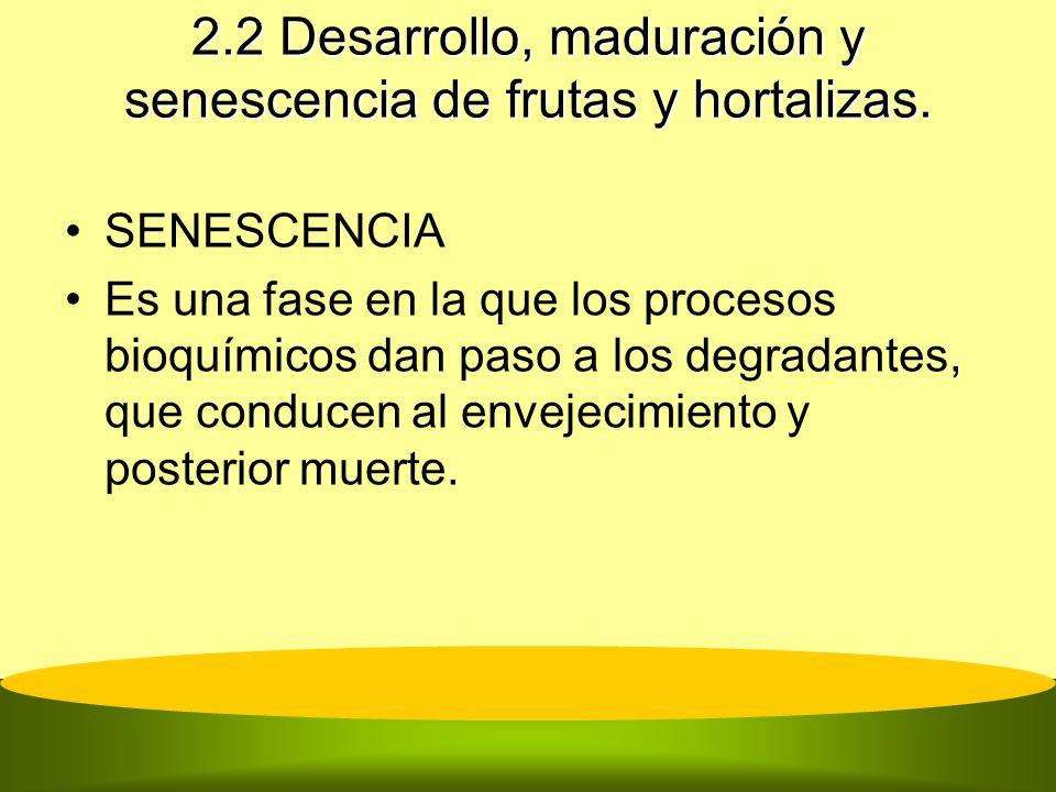 2.2 Desarrollo, maduración y senescencia de frutas y hortalizas. SENESCENCIA Es una fase en la que los procesos bioquímicos dan paso a los degradantes