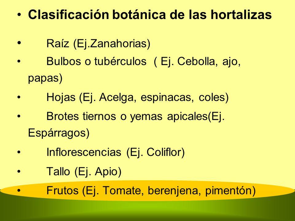 Clasificación botánica de las hortalizas Raíz (Ej.Zanahorias) Bulbos o tubérculos ( Ej. Cebolla, ajo, papas) Hojas (Ej. Acelga, espinacas, coles) Brot