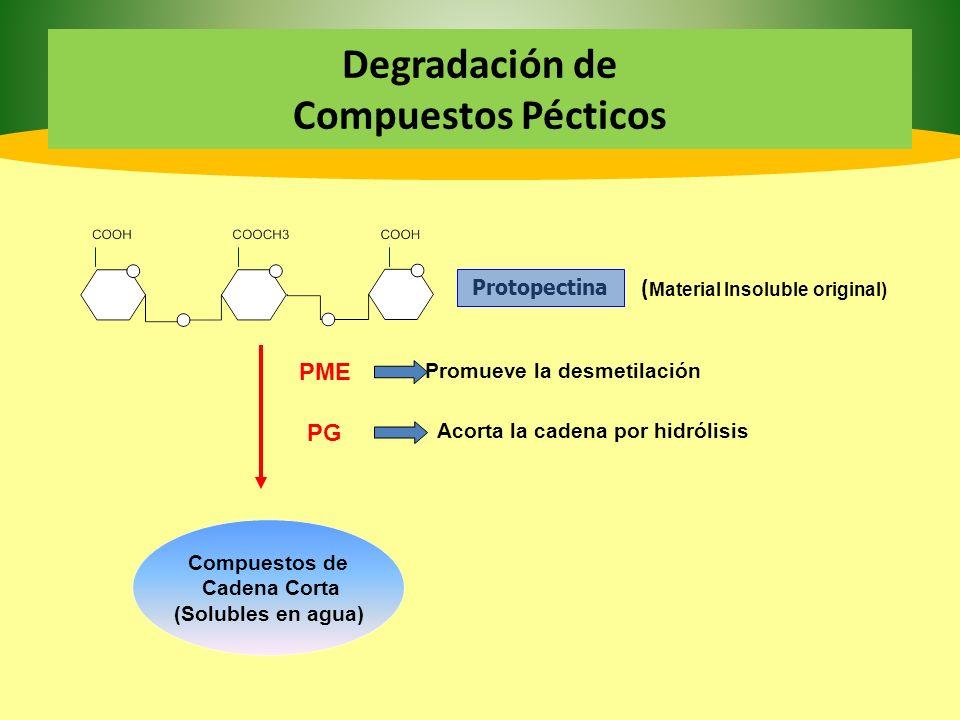 Carbohidratos Carbohidratos: Su degradación produce los cambios cuantitativos más importantes.