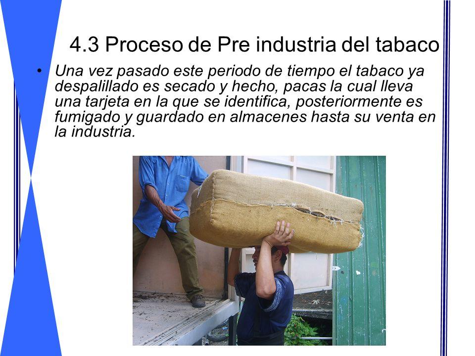 4.3 Proceso de Pre industria del tabaco Una vez pasado este periodo de tiempo el tabaco ya despalillado es secado y hecho, pacas la cual lleva una tar