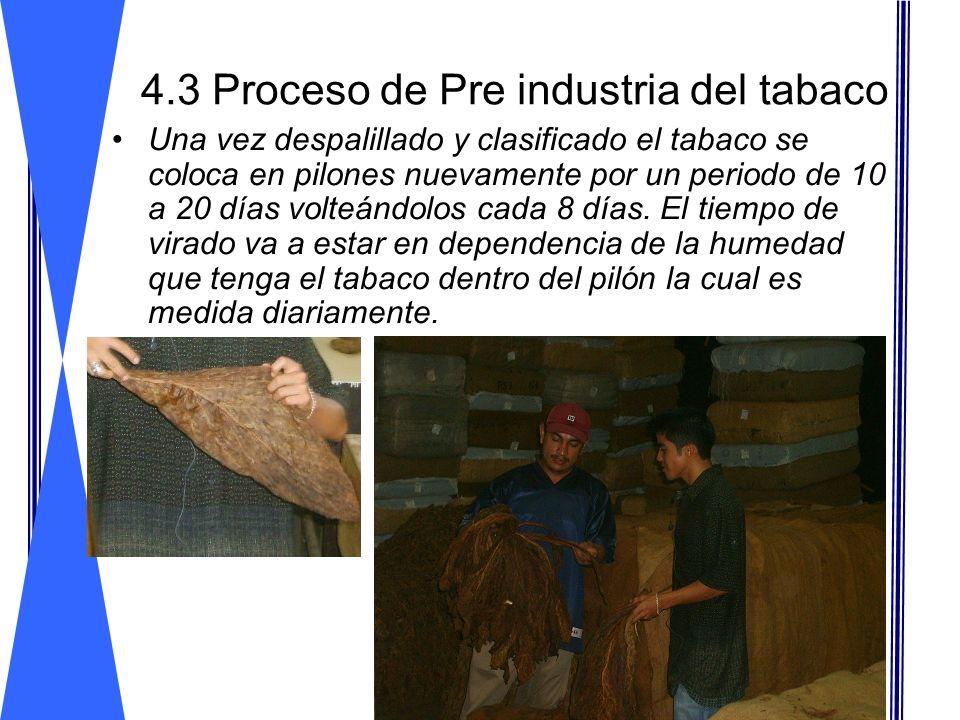 4.3 Proceso de Pre industria del tabaco Una vez despalillado y clasificado el tabaco se coloca en pilones nuevamente por un periodo de 10 a 20 días vo
