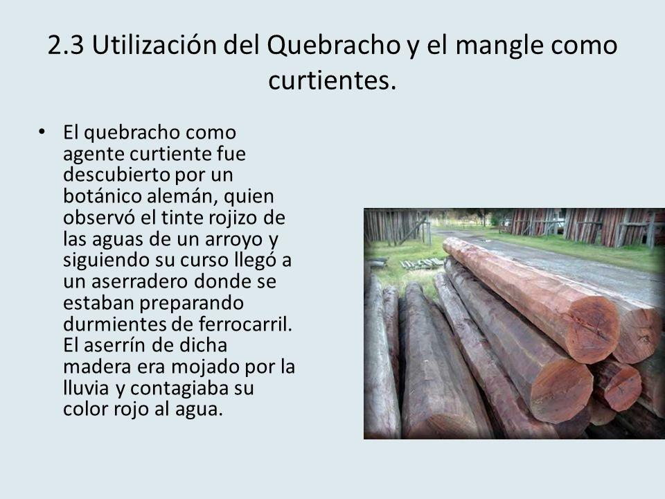 2.3 Utilización del Quebracho y el mangle como curtientes. El quebracho como agente curtiente fue descubierto por un botánico alemán, quien observó el