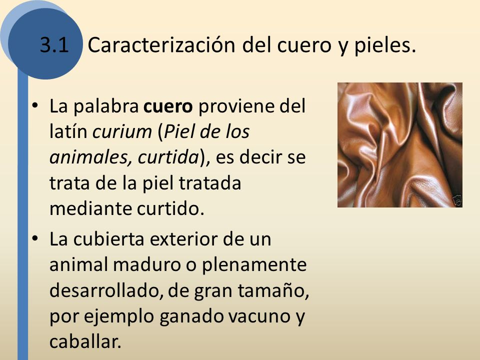 3.1Caracterización del cuero y pieles. La palabra cuero proviene del latín curium (Piel de los animales, curtida), es decir se trata de la piel tratad