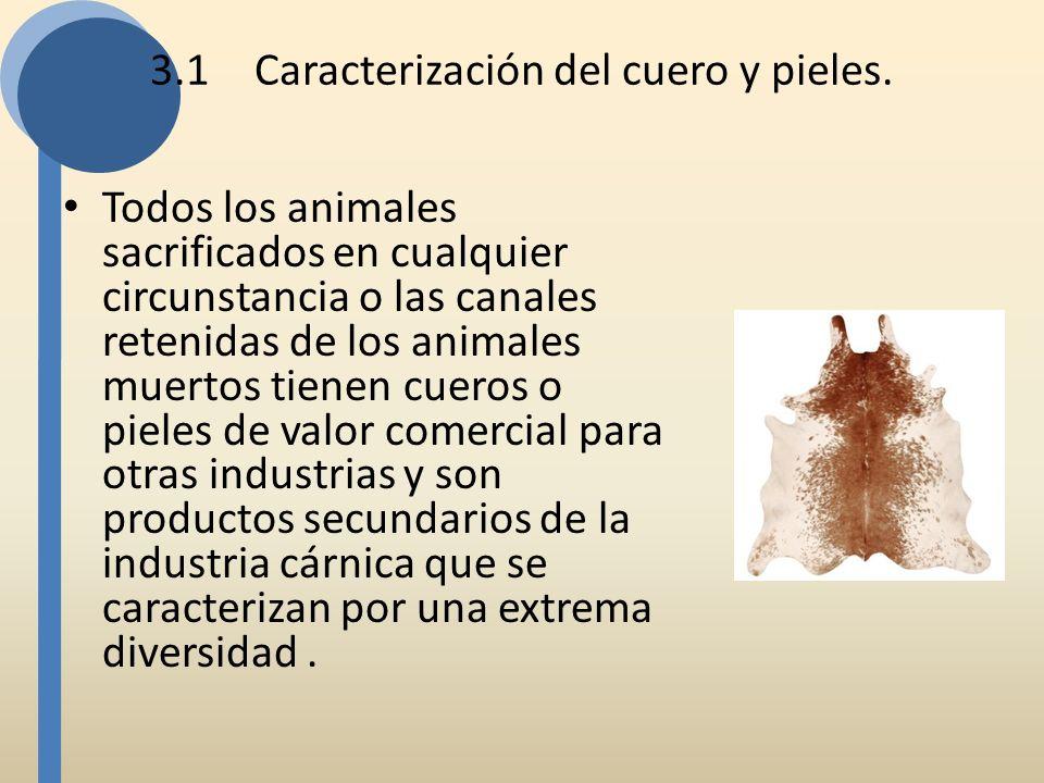 3.1Caracterización del cuero y pieles. Todos los animales sacrificados en cualquier circunstancia o las canales retenidas de los animales muertos tien