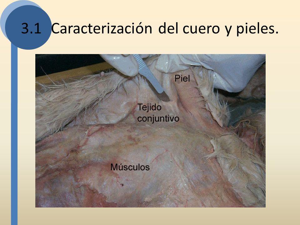 Según procedimiento de curtido Cuero crudo: No tiene ningún tratamiento químico para su conservación, solamente se descarna la piel, se la lava y se la estira mientras se seca.