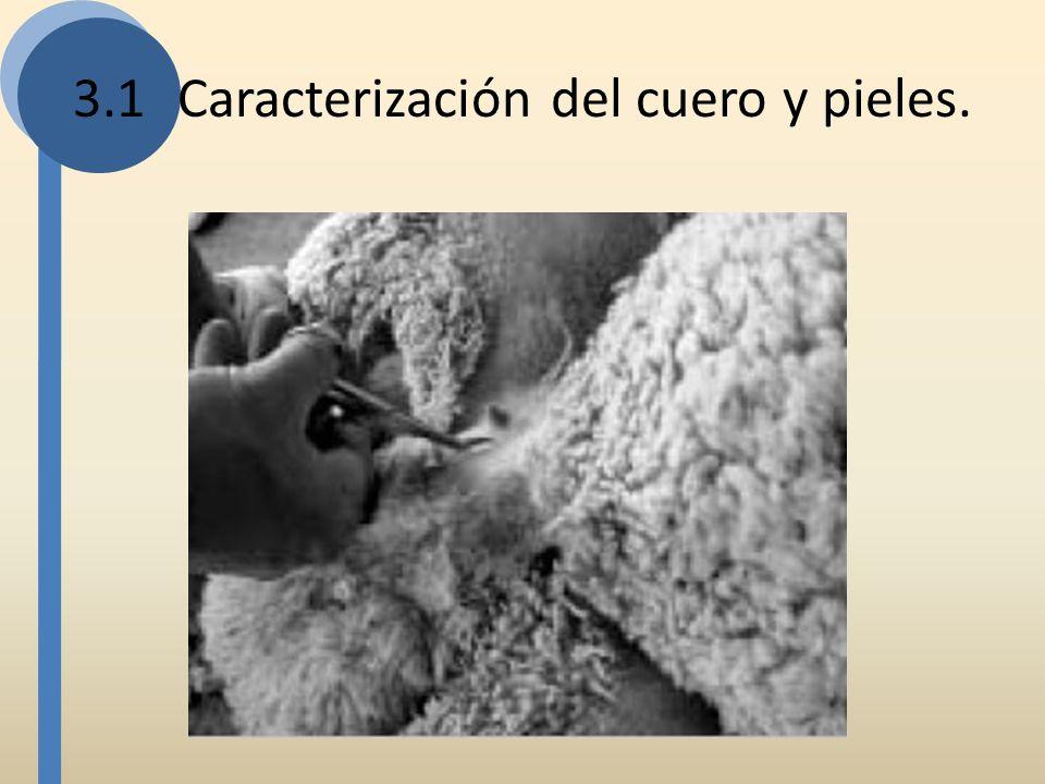 3.1 Caracterización del cuero y pieles.