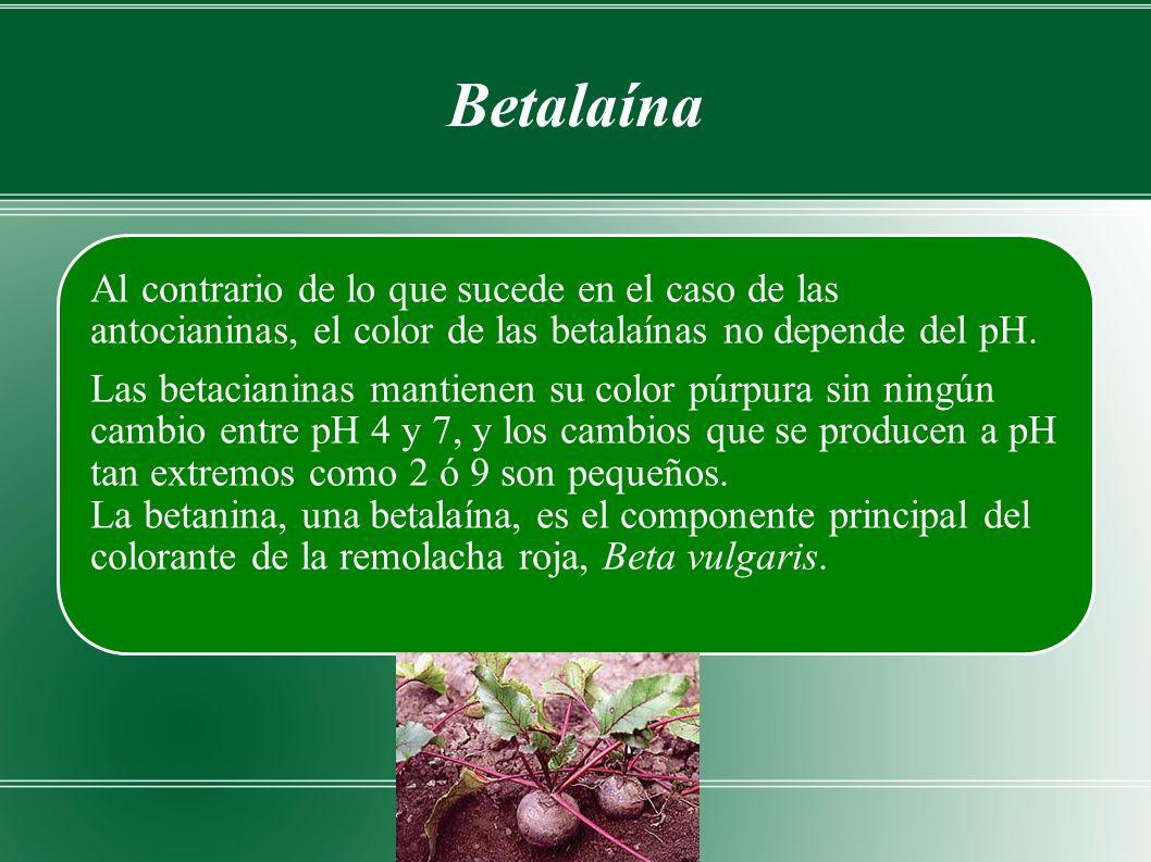 Betalaína Al contrario de lo que sucede en el caso de las antocianinas, el color de las betalaínas no depende del pH.