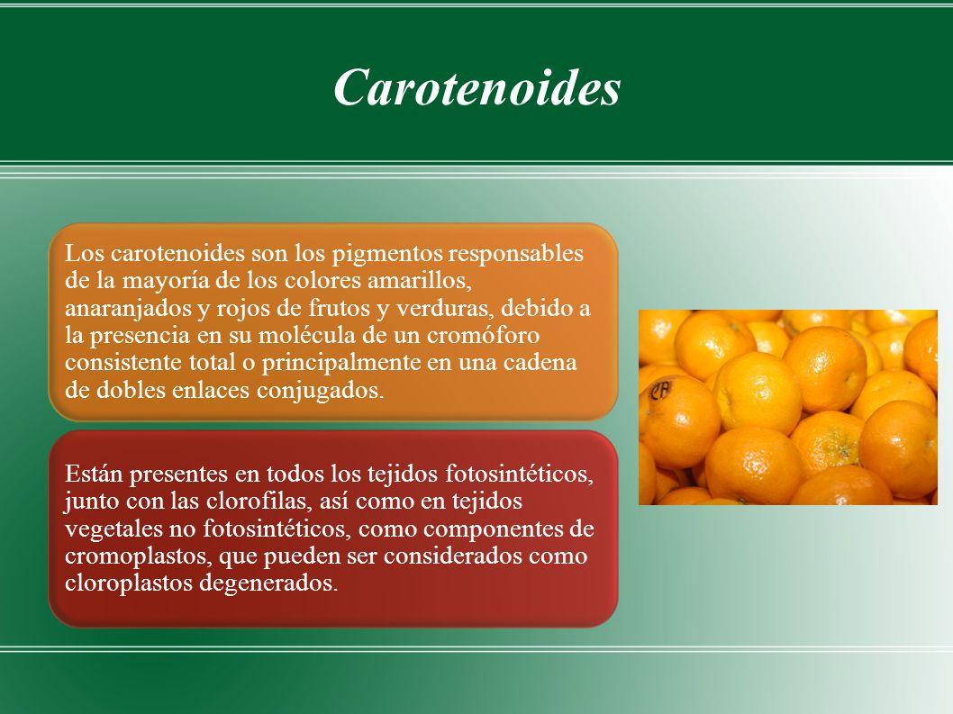 Carotenoides Los carotenoides son los pigmentos responsables de la mayoría de los colores amarillos, anaranjados y rojos de frutos y verduras, debido a la presencia en su molécula de un cromóforo consistente total o principalmente en una cadena de dobles enlaces conjugados.