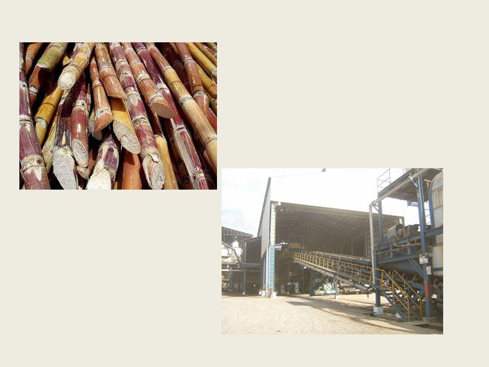 Inspección y lavado de la caña de azúcar Controlar la cantidad de materia prima.