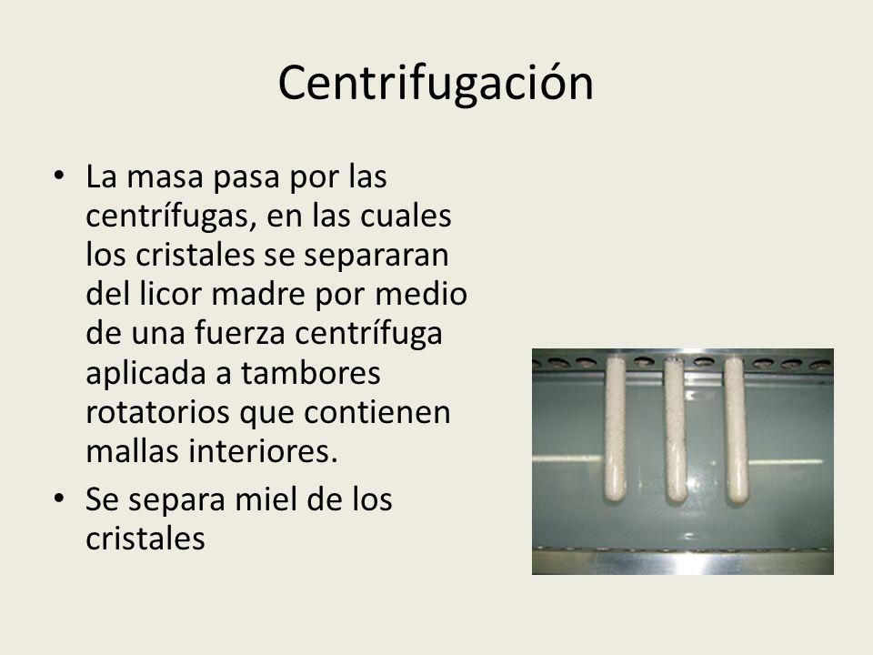 Centrifugación La masa pasa por las centrífugas, en las cuales los cristales se separaran del licor madre por medio de una fuerza centrífuga aplicada