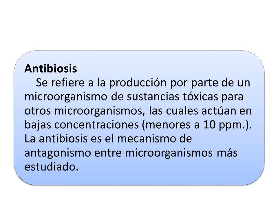 Antibiosis Se refiere a la producción por parte de un microorganismo de sustancias tóxicas para otros microorganismos, las cuales actúan en bajas conc