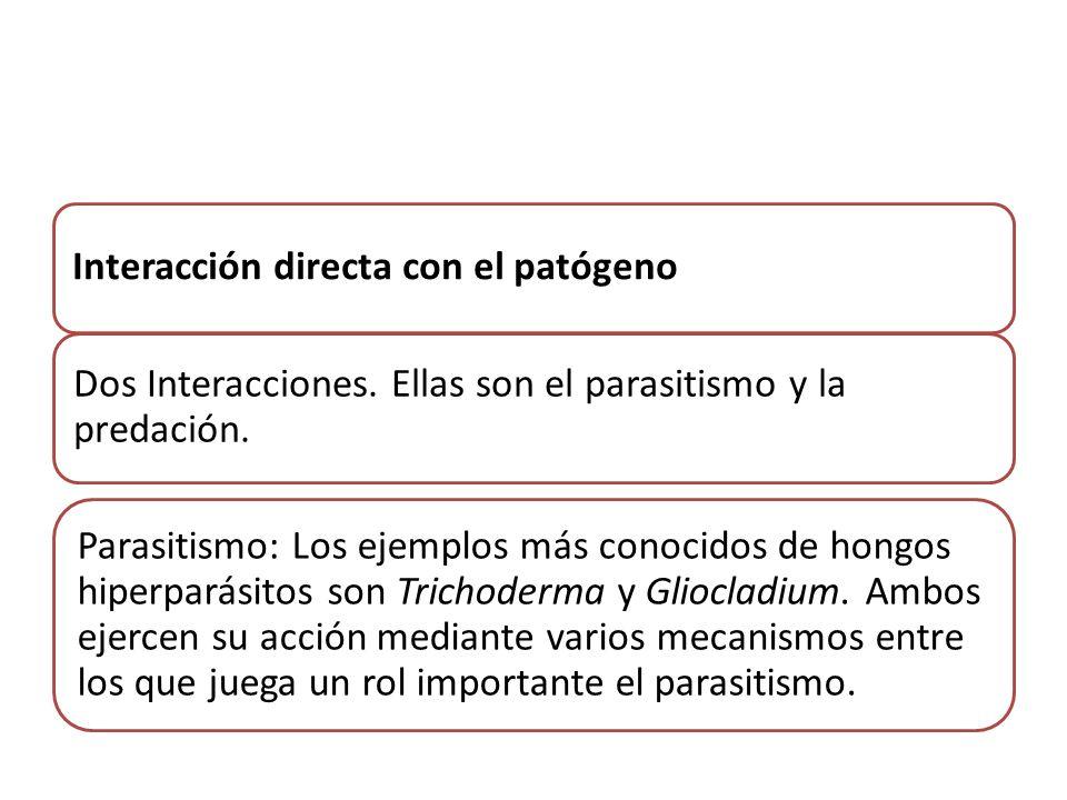 Interacción directa con el patógeno Dos Interacciones. Ellas son el parasitismo y la predación. Parasitismo: Los ejemplos más conocidos de hongos hipe