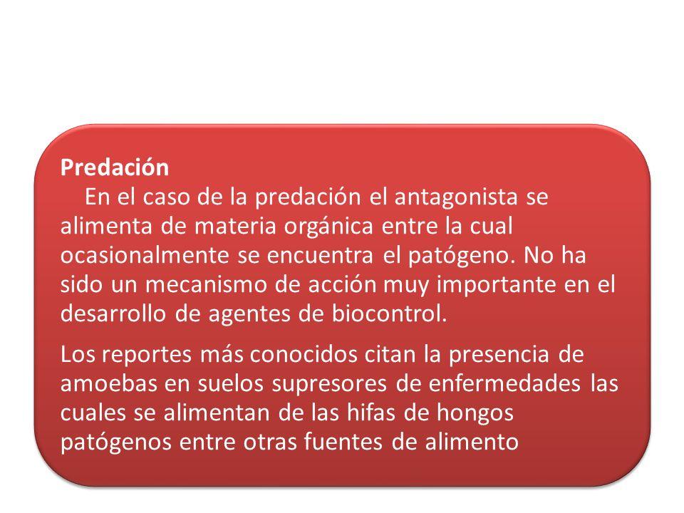 Predación En el caso de la predación el antagonista se alimenta de materia orgánica entre la cual ocasionalmente se encuentra el patógeno. No ha sido