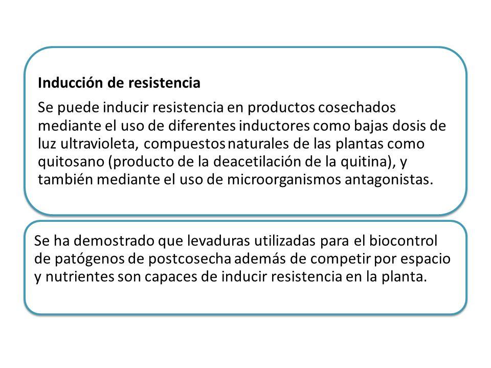 Inducción de resistencia Se puede inducir resistencia en productos cosechados mediante el uso de diferentes inductores como bajas dosis de luz ultravi