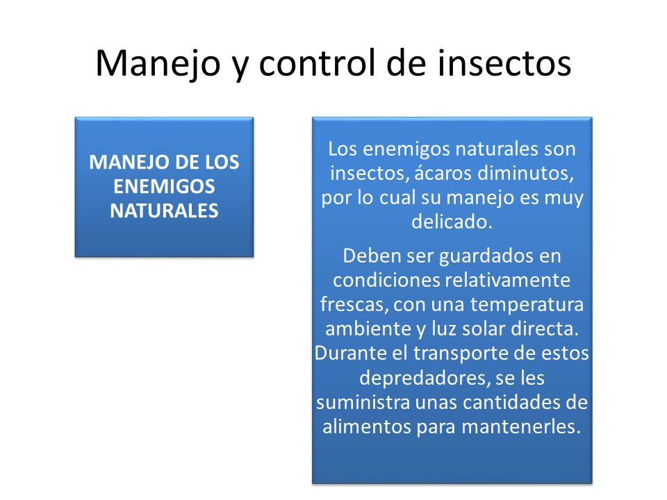 Manejo y control de insectos MANEJO DE LOS ENEMIGOS NATURALES Los enemigos naturales son insectos, ácaros diminutos, por lo cual su manejo es muy deli