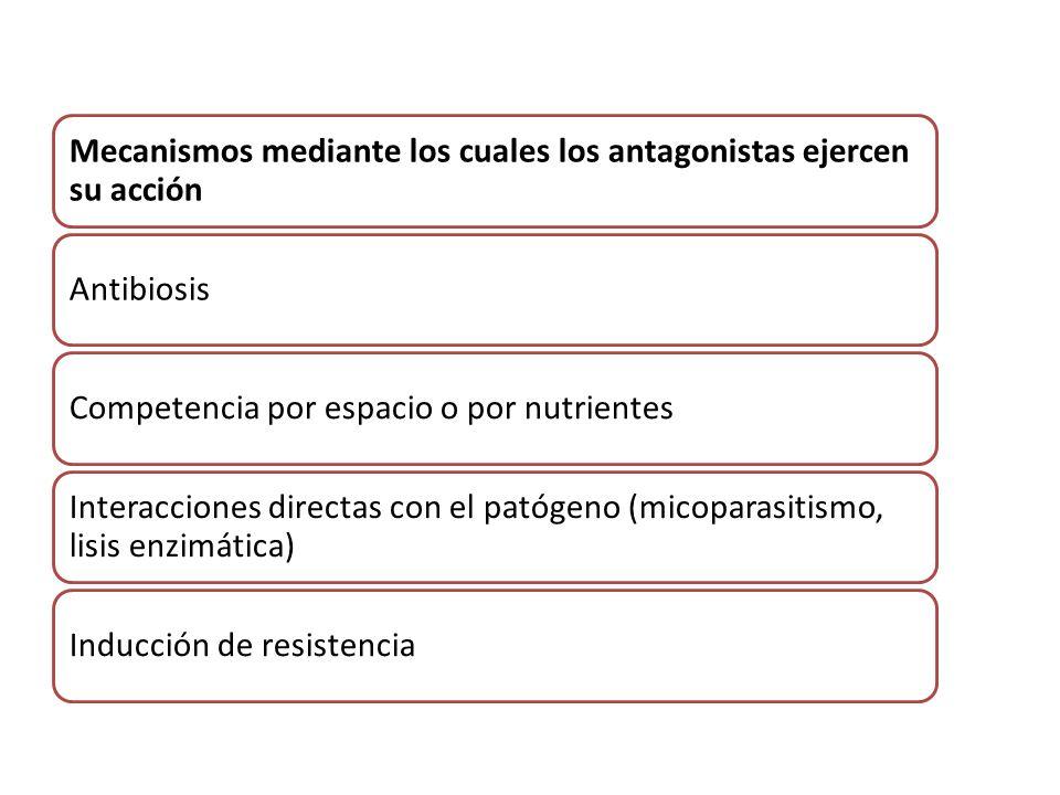Mecanismos mediante los cuales los antagonistas ejercen su acción AntibiosisCompetencia por espacio o por nutrientes Interacciones directas con el pat