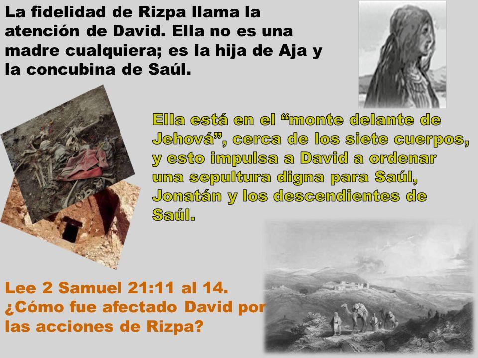 La fidelidad de Rizpa llama la atención de David. Ella no es una madre cualquiera; es la hija de Aja y la concubina de Saúl. Lee 2 Samuel 21:11 al 14.