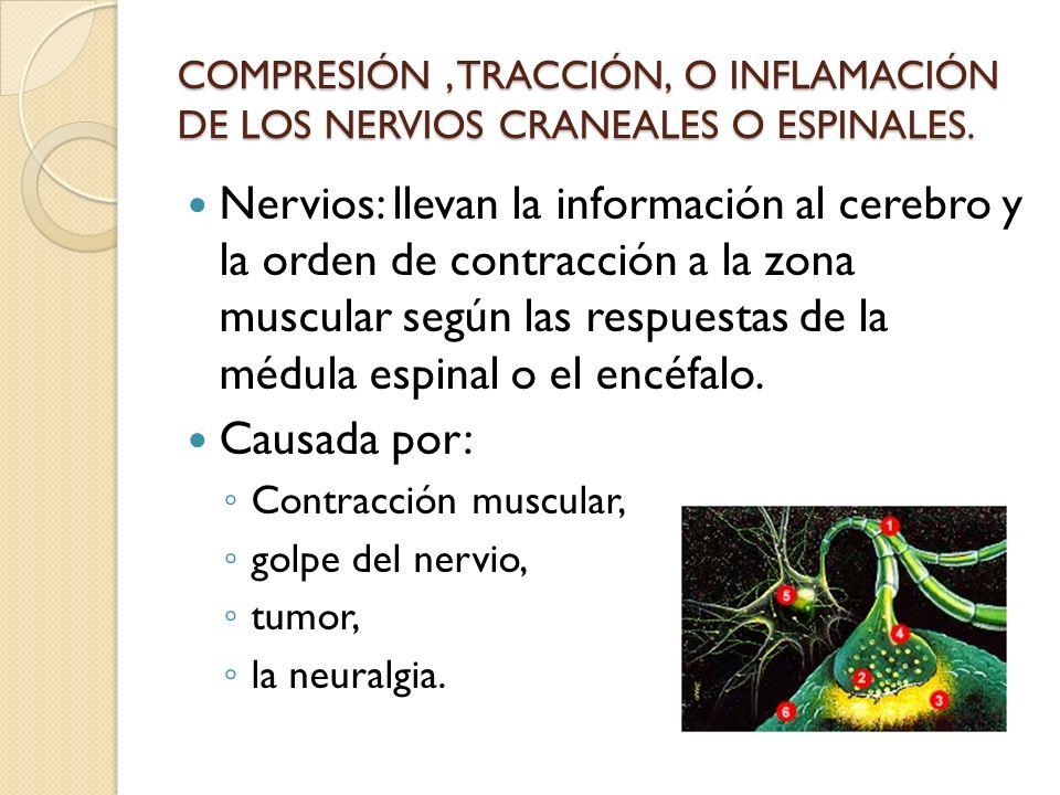 COMPRESIÓN, TRACCIÓN, O INFLAMACIÓN DE LOS NERVIOS CRANEALES O ESPINALES. Nervios: llevan la información al cerebro y la orden de contracción a la zon