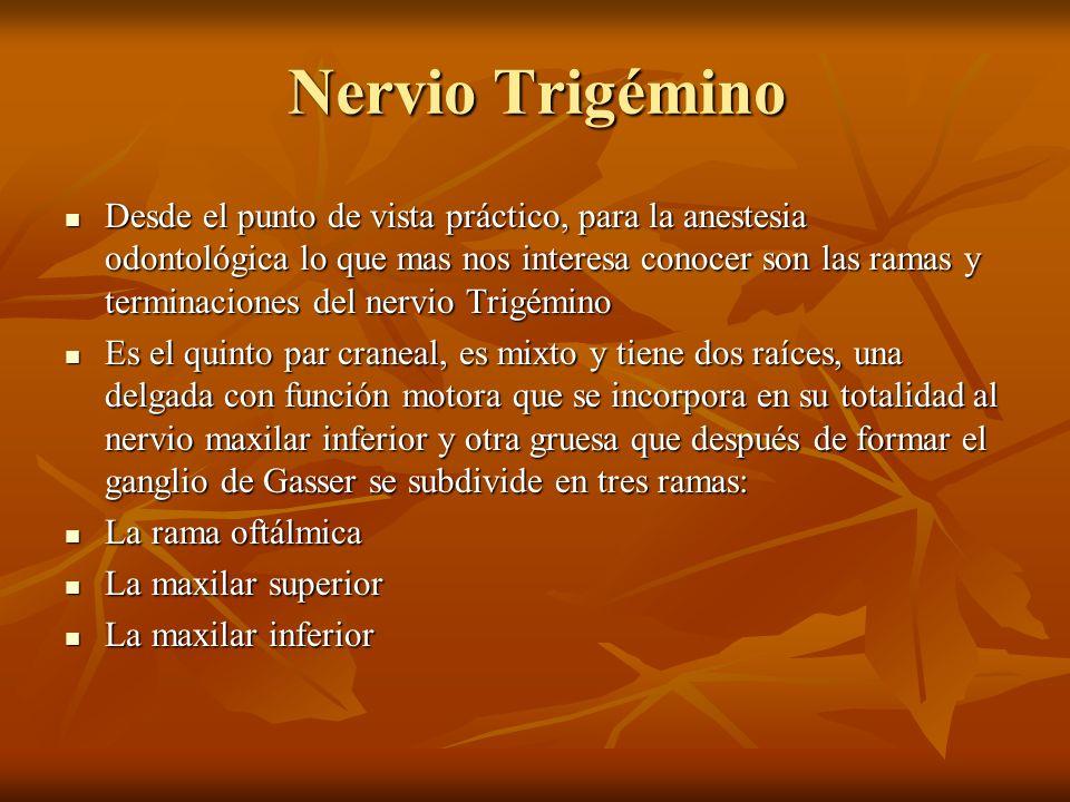 Nervio Trigémino Desde el punto de vista práctico, para la anestesia odontológica lo que mas nos interesa conocer son las ramas y terminaciones del ne