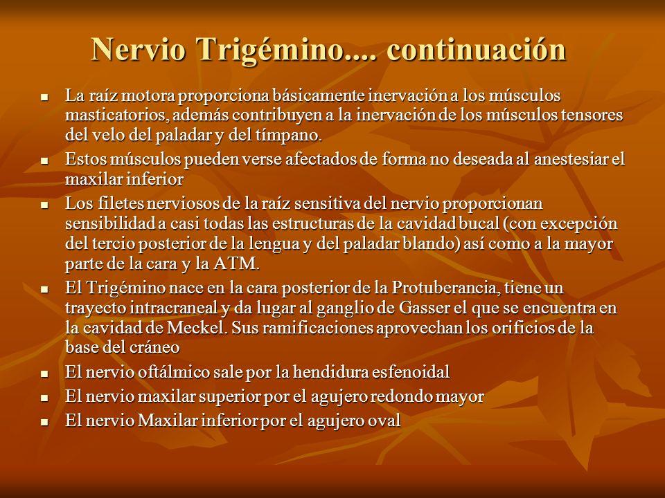 Nervio Trigémino.... continuación La raíz motora proporciona básicamente inervación a los músculos masticatorios, además contribuyen a la inervación d
