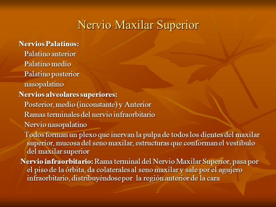 Nervio Maxilar Superior Nervios Palatinos: Nervios Palatinos: Palatino anterior Palatino anterior Palatino medio Palatino medio Palatino posterior Pal