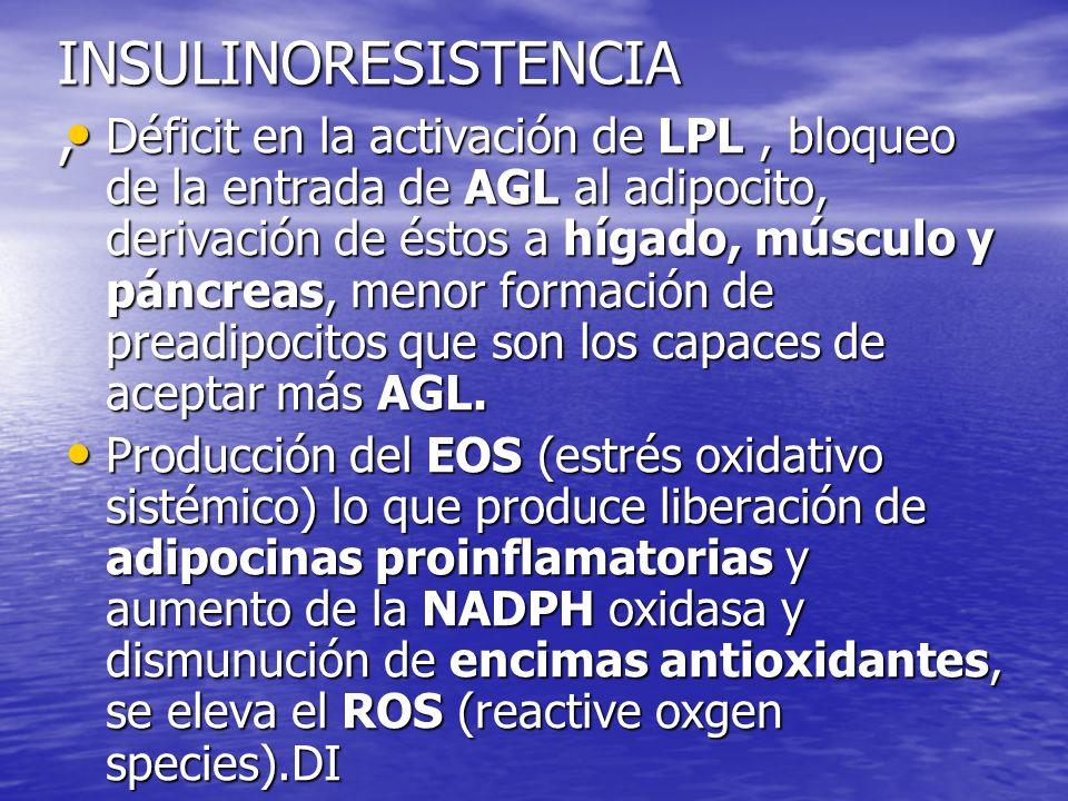 INSULINORESISTENCIA, Déficit en la activación de LPL, bloqueo de la entrada de AGL al adipocito, derivación de éstos a hígado, músculo y páncreas, men