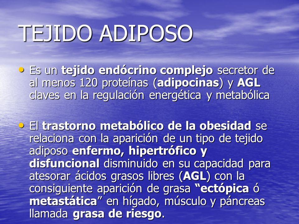 TEJIDO ADIPOSO Es un tejido endócrino complejo secretor de al menos 120 proteínas (adipocinas) y AGL claves en la regulación energética y metabólica E