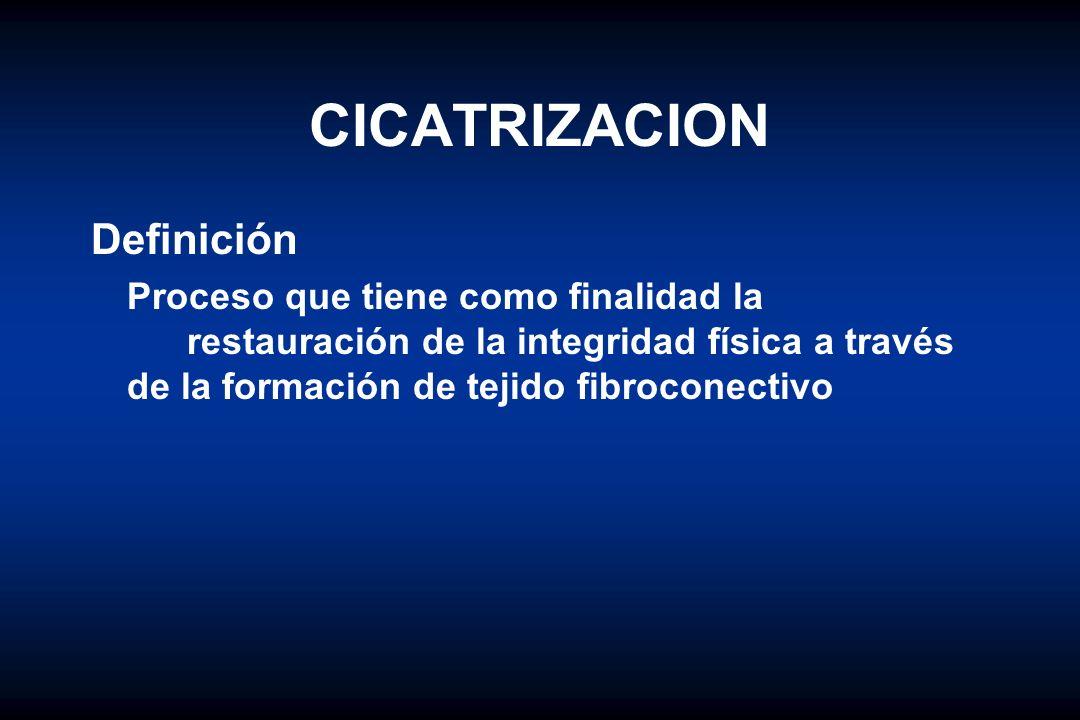 CICATRIZACION Para su estudio se ha dividido en tres fases: I.Fase Inflamatoria o de Retraso inicial II.Fase Proliferativa III.Fase de Maduración y Remodelación