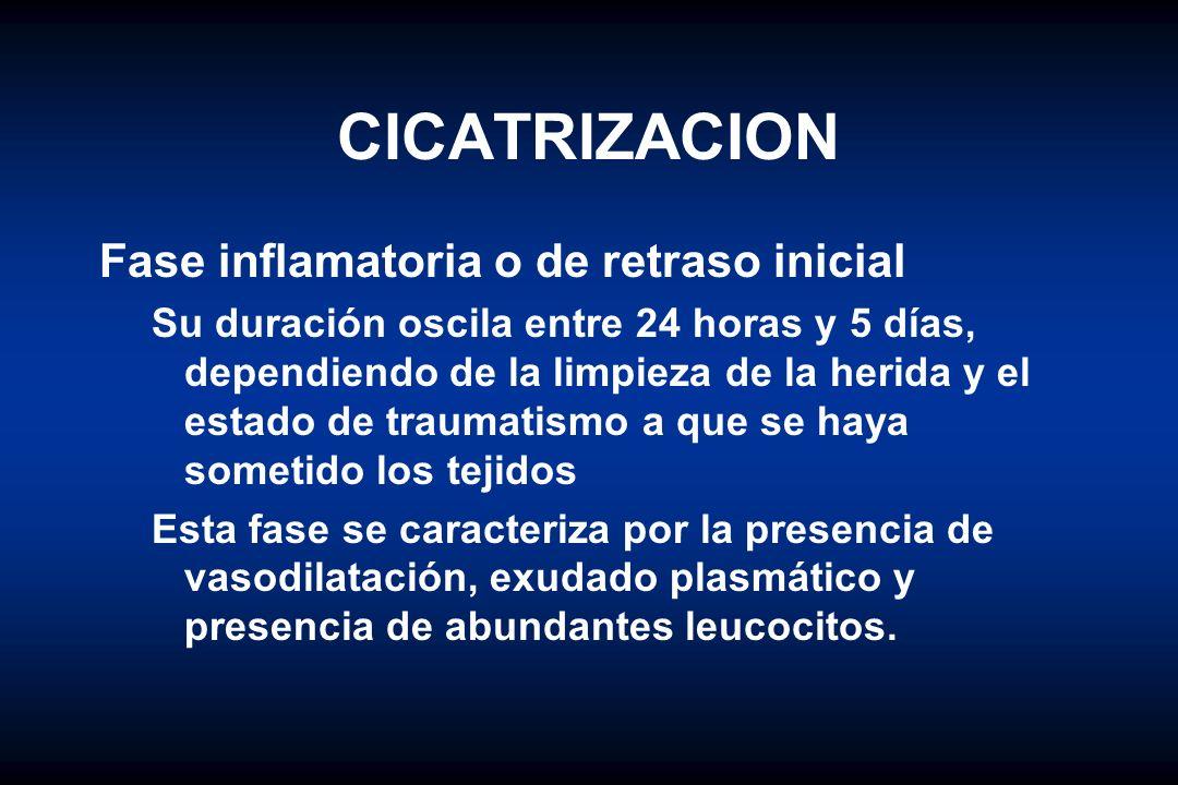 CICATRIZACION Fase inflamatoria o de retraso inicial Su duración oscila entre 24 horas y 5 días, dependiendo de la limpieza de la herida y el estado d