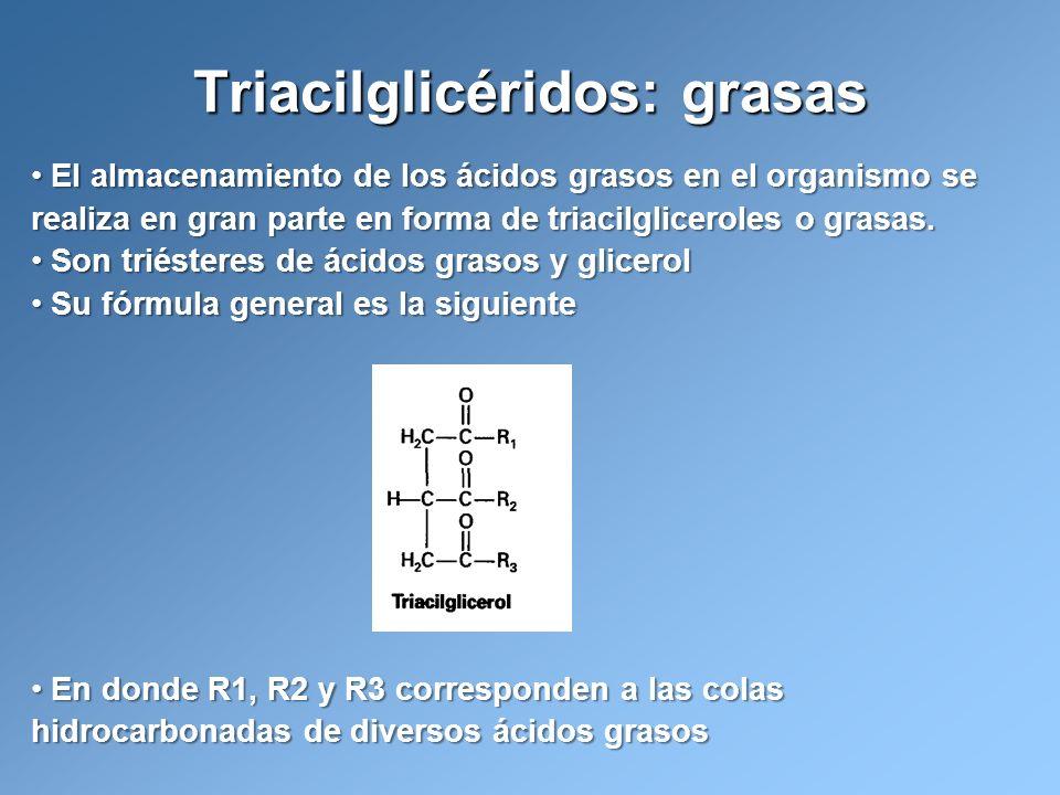 El almacenamiento de los ácidos grasos en el organismo se realiza en gran parte en forma de triacilgliceroles o grasas. El almacenamiento de los ácido