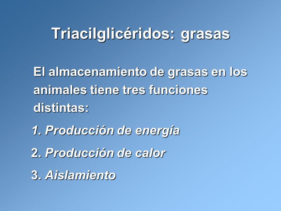El almacenamiento de grasas en los animales tiene tres funciones distintas: 1. Producción de energía 2. Producción de calor 3. Aislamiento Triacilglic