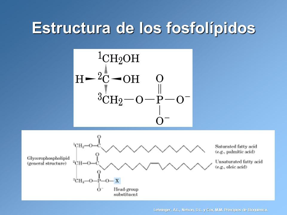 Estructura de los fosfolípidos Lehninger, A.L., Nelson, D.L. y Cox, M.M. Principios de Bioquímica.