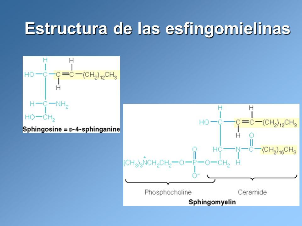 Estructura de las esfingomielinas