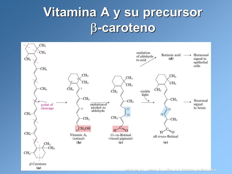 Vitamina A y su precursor -caroteno Lehninger, A.L., Nelson, D.L. y Cox, M.M. Principios de Bioquímica.