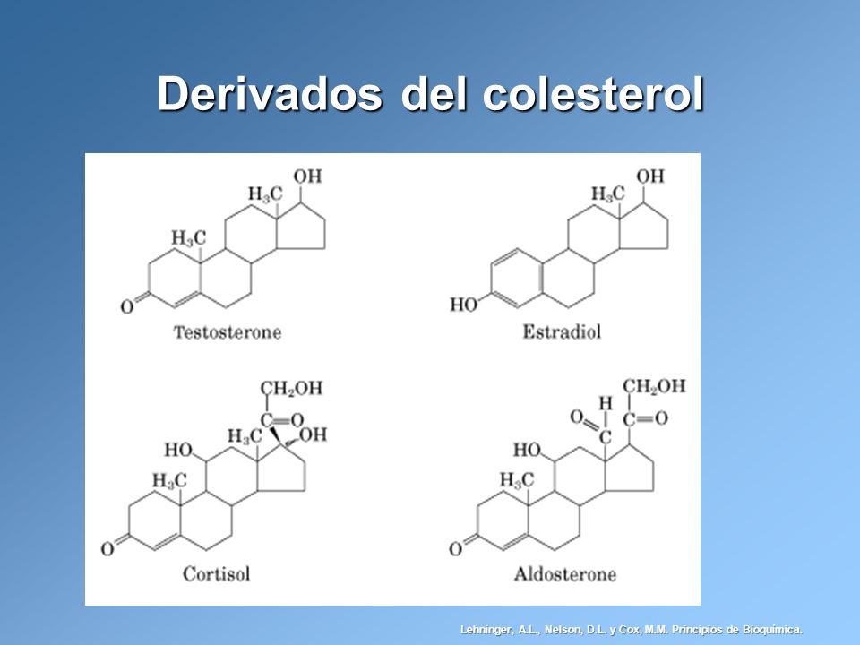 Derivados del colesterol Lehninger, A.L., Nelson, D.L. y Cox, M.M. Principios de Bioquímica.