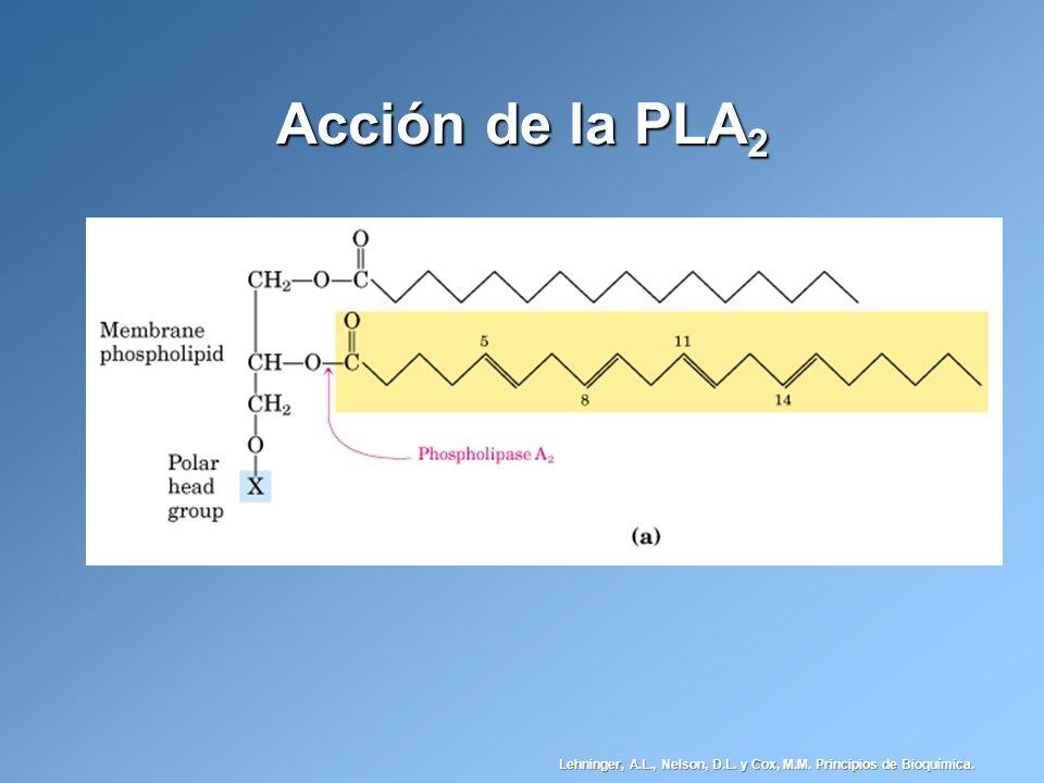 Acción de la PLA 2 Lehninger, A.L., Nelson, D.L. y Cox, M.M. Principios de Bioquímica.