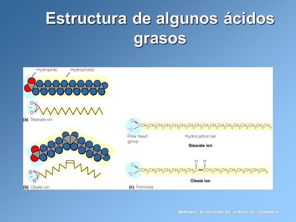 Estructura de algunos ácidos grasos Mathews, C.K., van Holde, K.E. y Ahern, K.G. Bioquímica.