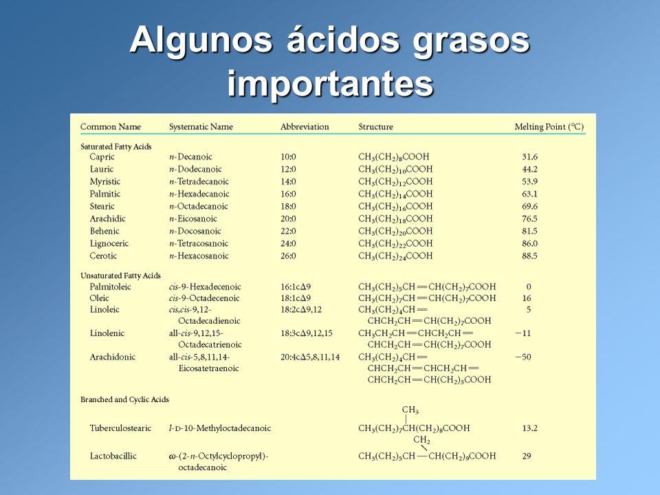 Hidrólisis alcalina de triacilglicéridos o saponificación Lehninger, A.L., Nelson, D.L.