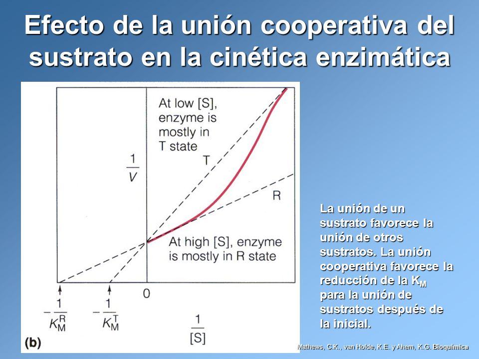 Efecto de la unión cooperativa del sustrato en la cinética enzimática La unión de un sustrato favorece la unión de otros sustratos. La unión cooperati