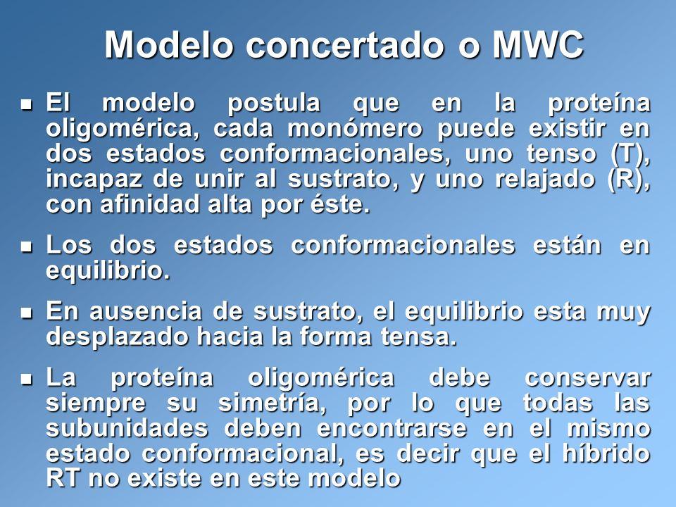 Modelo concertado o MWC El modelo postula que en la proteína oligomérica, cada monómero puede existir en dos estados conformacionales, uno tenso (T),