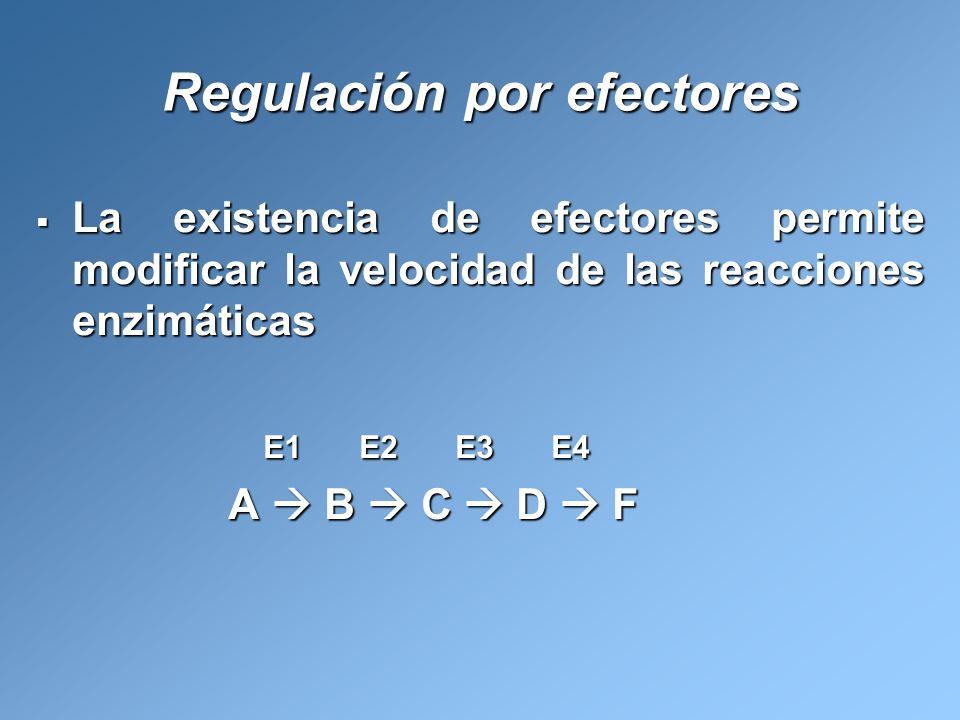 Regulación por efectores La existencia de efectores permite modificar la velocidad de las reacciones enzimáticas La existencia de efectores permite mo