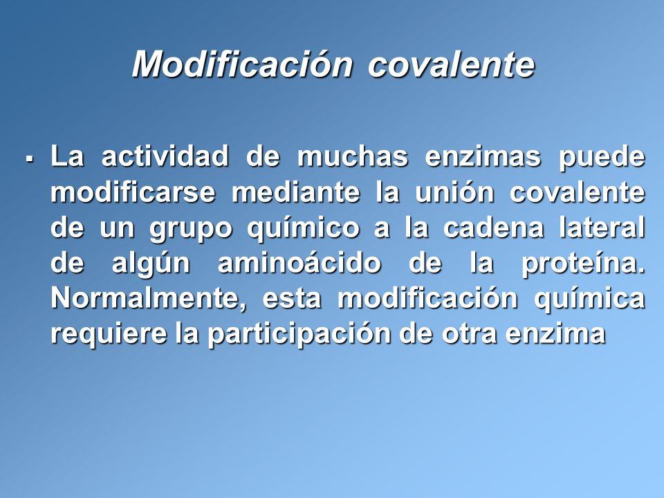 Modificación covalente La actividad de muchas enzimas puede modificarse mediante la unión covalente de un grupo químico a la cadena lateral de algún a